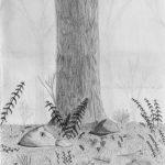 dessins au graphite d'un sous-bois