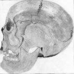 crâne humain de profil dessiné au crayon graphite