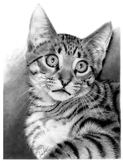 نقاشی سیاه سفید حیوان Dessin Chat Realiste