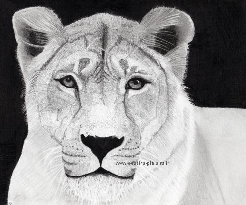 La lionne - Lionne dessin ...