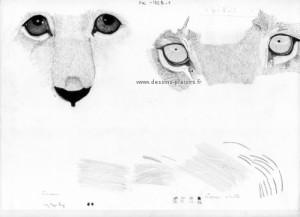 dessin d'un regard de lionceau et d'une lionne