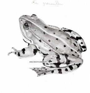 Pas à pas sur un dessin d'une grenouille Phase 4
