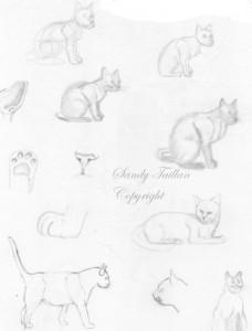 petitsz croquis de chats au crayon graphite