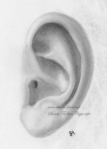 Dessin d'une oreille au fusain