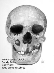 Dessin d'un crâne au crayon graphite