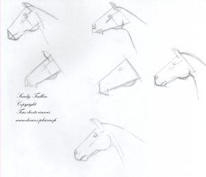 Croquis de la tête d'un cheval