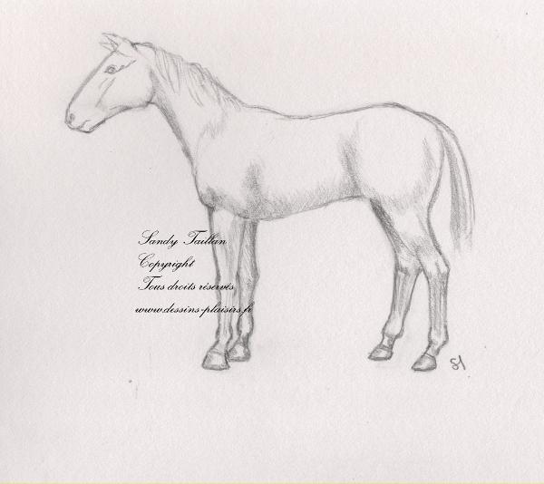 Croquis au crayon d'un cheval